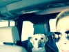 Dede Greisbauer and Piper travel to Tucson